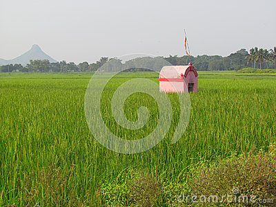 Lonely little pink house temple in green fields