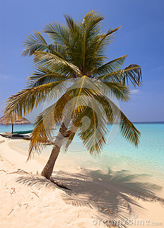 Lonely palm tree on a beach of the tropical island
