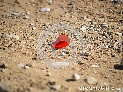 Lonely petal