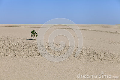 Lonely plant in the desert