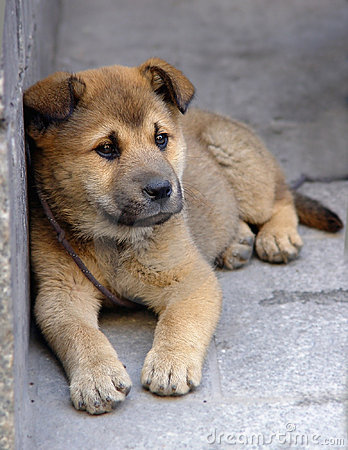 Free Lonely Puppy Royalty Free Stock Images - 182029