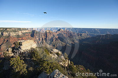 Lonely raven over Grand Canyon