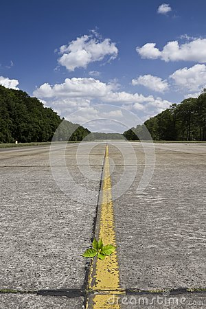 Lonely runway with a plant