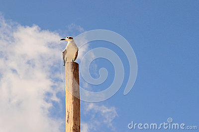 Lonely seagull on a pile