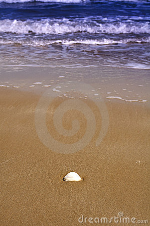 Lonely shell on the beach