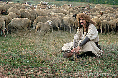 Lonely shepherd with sheep on green meadow