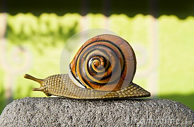 Lonely snail crawls along the cement path