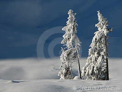 Lonely snowy trees