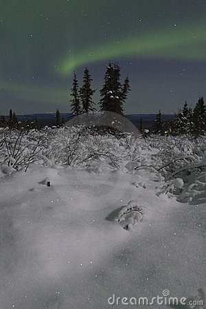 Lonely spruce in moon landscape with aurora borealis
