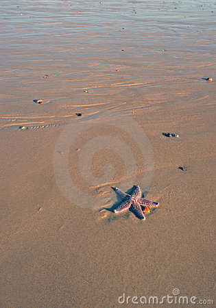 Lonely Starfish
