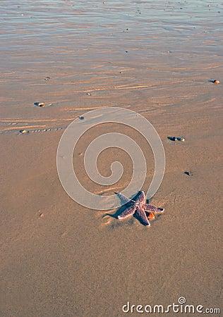 Lonely Starfish