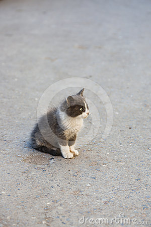 Lonely stray kitten