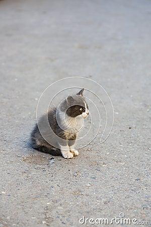 Lonely stray kitten