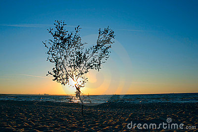 Lonely sunset tree #2