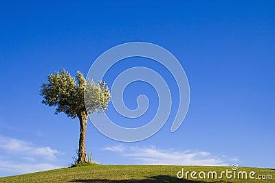 Lonely tree 10