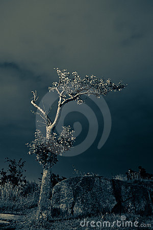 Free Lonely Tree 2 Stock Photography - 18409512