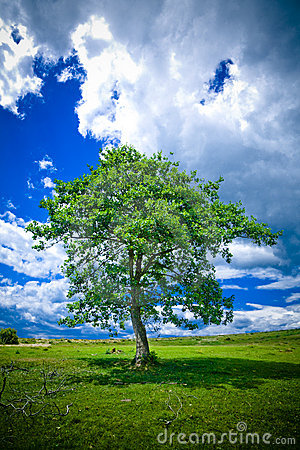 Free Lonely Tree Stock Image - 2774291