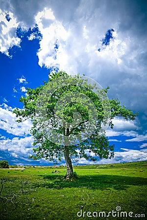 Free Lonely Tree Stock Image - 2774291