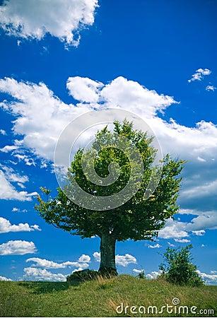 Free Lonely Tree Stock Photos - 2774343