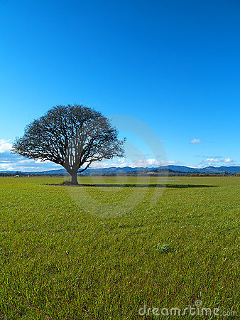 Free Lonely Tree Stock Photo - 645440