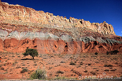Lonely tree in capital reef