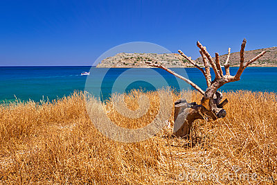 Lonely tree on the coast of Crete