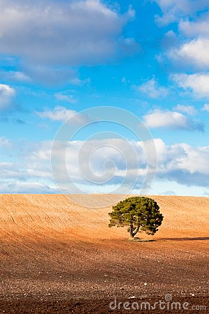 Lonely Tree with copy space