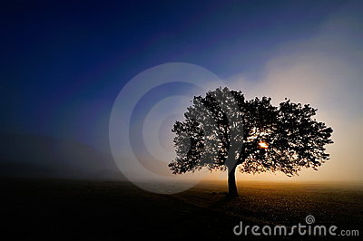 Lonely tree on field