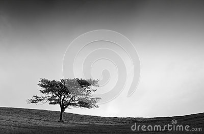 Lonely tree in the field on black and white