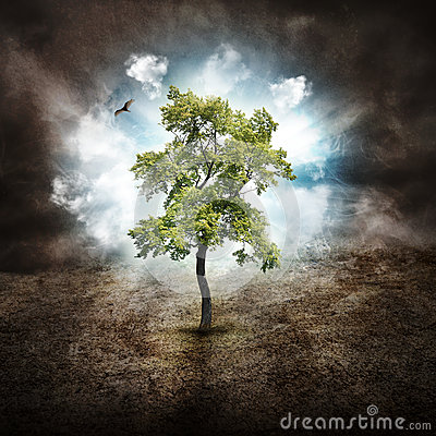 Lonely Tree of Hope on Dry Land