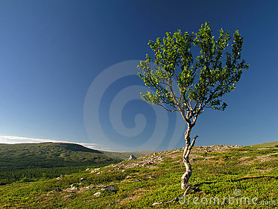 Lonely tree on mountain
