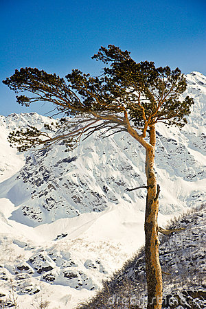 Lonely tree in the mountains.