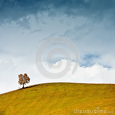 Free Lonely Tree On The Hillside Against A Cloudly Sky Stock Photography - 35990072