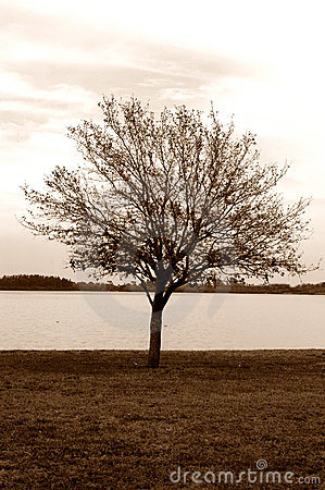 Lonely tree sepia