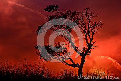 Lonely Tree with striking sunset