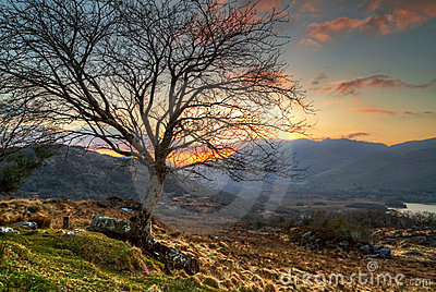 Lonely tree at sunset in mountains