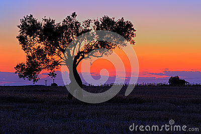 Lonely tree at sunset
