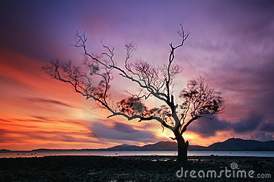 Lonely tree by the  sunset, Thailand