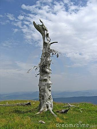 Lonely tree at the top of the mountain