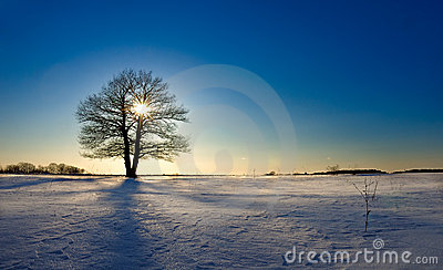Lonely tree in winter field closes sun on decline