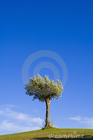 Lonely trees 15