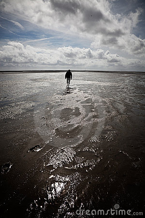Lonely wanderer in the Wadden Sea