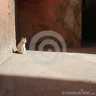 Lonely white cat