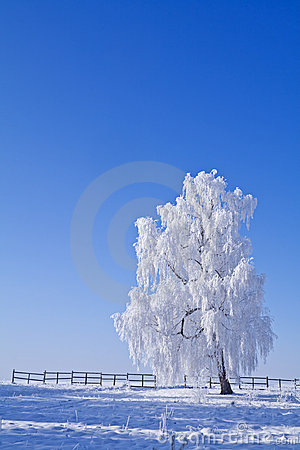 Lonely white frost covered tree against blue sky