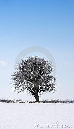 Free Lonely Winter Tree Stock Photos - 1973013