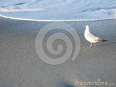 Lonesome Gull Stock Photo