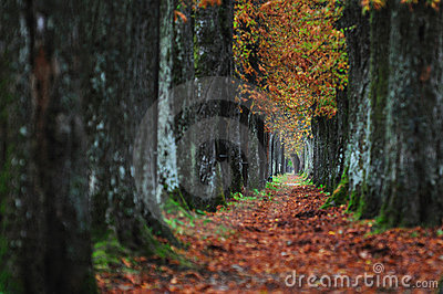 Long alley at fall autumn sesson