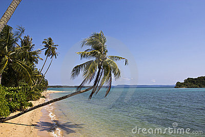 The long beach with coconut tree