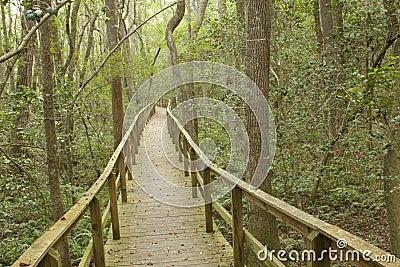 Long Boardwalk Through A Forest