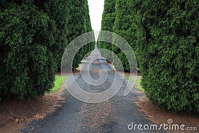 Long empty driveway